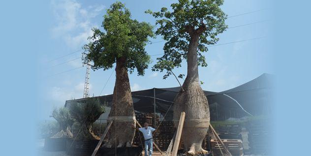 Viveros de arboles frutales ornamentales olivos for Viveros en badajoz